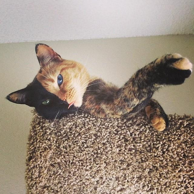 Venus - kotka o dwóch twarzach