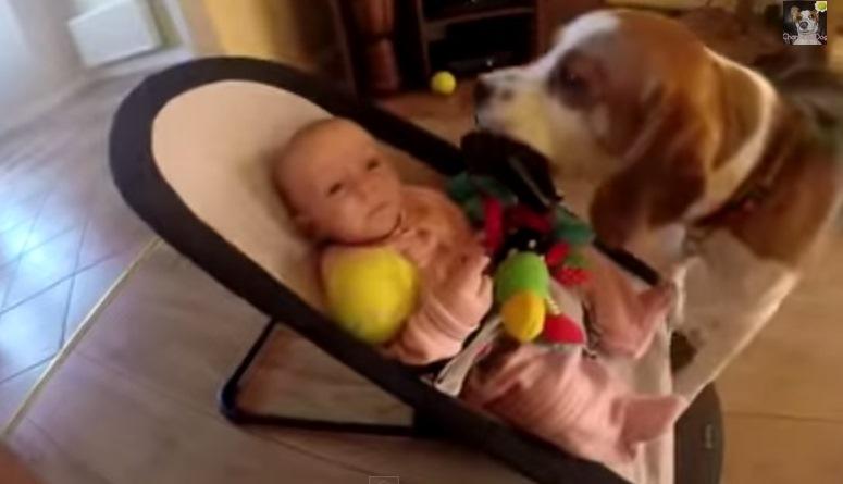 Pies Charlie oddaje zabawkę