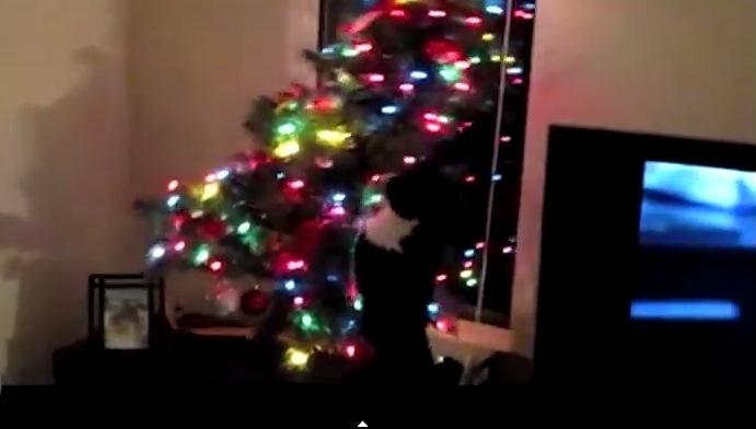 Koty masakrują choinki